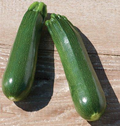 Partenon Zucchini Sommerkürbis 15 Samen