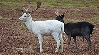 Best white stag photography Reviews
