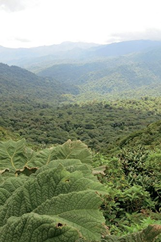 Monteverde Cloud Forest Nature Preserve Costa Rica Journal: 150 page lined notebook/diary