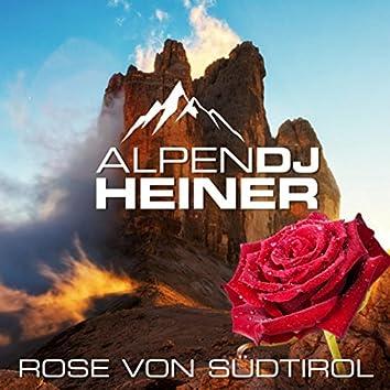 Rose von Südtirol