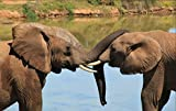 Puzzle De Madera Animal Elefante 1000 Piezas Tangram Jigsaw Brain Teaser Toy para Adulto Caja De Rompecabezas De Madera Juego