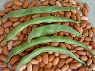 David's Garden Seeds Bean Bush Romano #14 SL9876 (Green) 100 Non-GMO, Heirloom Seeds