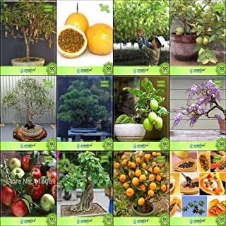 Seed Bonsai Seeds : Seeds Combo Pack Combo Tamarind, Passion Fruit - Yellow, Passion Fruit - Violet, Thailand Guavaeucalyptus Grandis,Australian Pine,Guava,Jacaranda,ApplSEED Seed (10 per Packet)