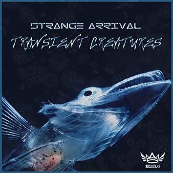 Transient Creatures