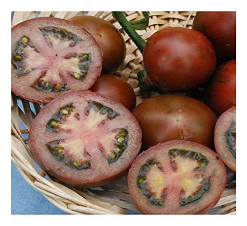 """Premier Seeds Direct Tomaten """"Schwarzer Russe"""" beinhaltet 100 Samen"""