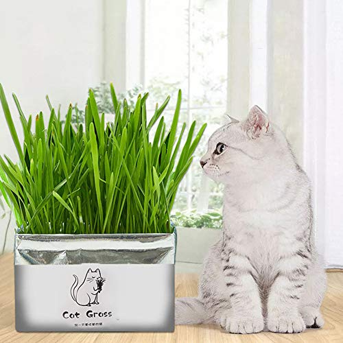 AKDSteel Pet Cat Grass Soilless Hydroponic Seed Growing for Oral Cavity Cleaning Rye grass for Home Use