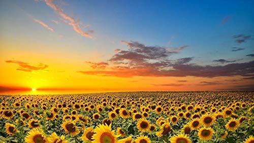 MKmd-s Puzzle da 1000 Pezzi paesaggi, Sole, Natura, Girasole, Estate, Mini Puzzle