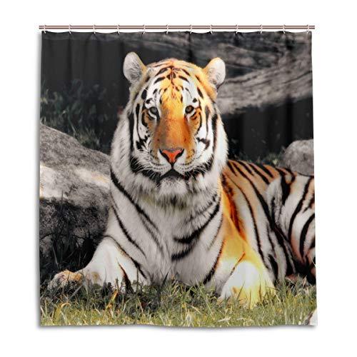 BIGJOKE Duschvorhang, Afrikanischer Tiger, schimmelresistent, wasserdicht, Polyester, 12 Haken, 167,6 x 182,9 cm, Heimdekoration