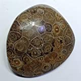 ZZLLFF 100-200G Natural Coral Fossil Espécimen Palm Stone Original Piedra Roca Cuarzo Cristal Minal Decoración Decoración Enseñanza Reiki