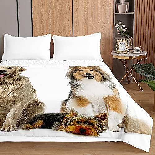 3D Gato Colcha de Verano Cubrecama Colcha Bouti, Chickwin Ligero Edredón Manta de Dormitorio - Suave Multiuso Colchas para Cama de Infantil Individual Matrimonio (Golden Retriever,100x150cm)
