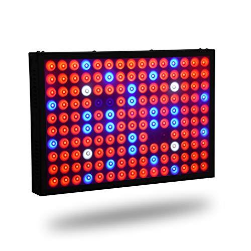 QQJK LED wachsen Licht, 600W Beste Sonnenlicht Full Spectrum wachsen Lampe, Wachstum Lampe für Gemüsegewächshaus hydroponischen wachsen Zelt (150Pcs LED)
