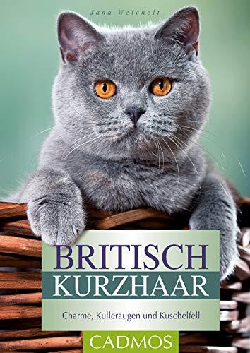 Britisch Kurzhaar: Charme, Kulleraugen und Kuschelfell (Katzen)