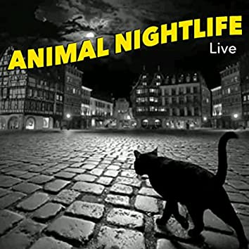 Animal Nightlife Live