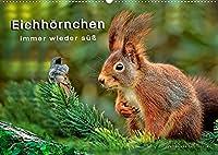 Eichhoernchen - immer wieder suess (Wandkalender 2022 DIN A2 quer): Eichhoernchen - flinke kleine Kobolde in Wald und Park. (Monatskalender, 14 Seiten )