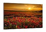 Cuadro sobre lienzo - Impresión de Imagen - amapola flor prado - 100x70cm - Imagen Impresión - Cuadros Decoracion - Impresión en lienzo - Cuadros Modernos - Lienzo Decorativo - AA100x70-3643