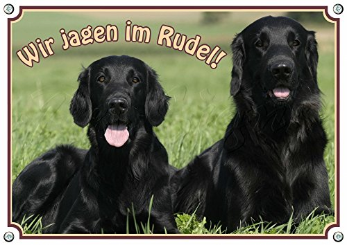 Hundeschild - Flat Coated Retriever - stabile Metallplatte mit Fotodruck, DIN A4