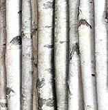Wilson Enterprises White Birch Poles, Natural, Kiln Dried, Home Decor Birch (5, 6 ft Long x 1-1.5 inch Diameter)