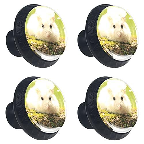 KAMEARI White Pet Hamster Nature - Tirador de 4 piezas para cajones con forma de círculo, de cristal, con tornillos, para casa, cocina, oficina