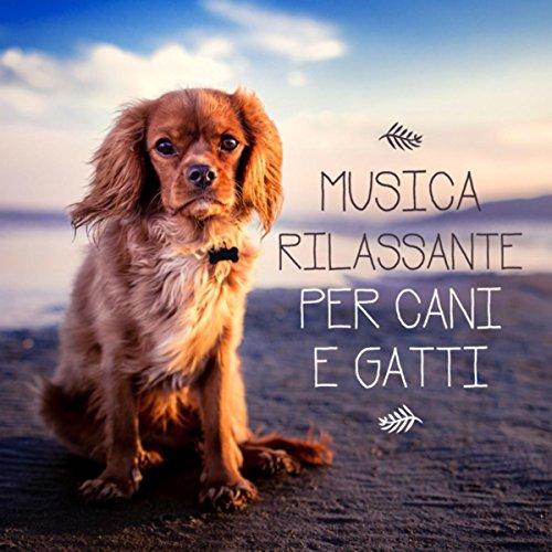 Musica rilassante per cani e gatti - Musica rilassante per calmare l'ansia di separazione, Dormire bene