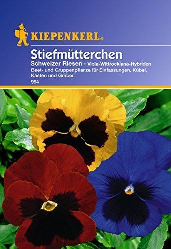 Kiepenkerl Stiefmütterchen Schweizer Riesen
