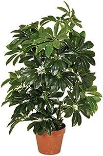 Planta artificial cheflera 65 cm altura, Catral 74010004