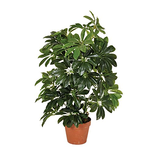 Planta artificial cheflera 65 cm altura, Catral 74010004 ⭐