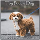 Toy Poodle Dog Calendar 2022: Toy Poodle Dog calendar 2022 '8.5x8.5' Inch 16 Months JAN 2022 TO APR 2023 finished and Glossy
