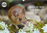 Gruesse von der Maus! (Wandkalender 2022 DIN A3 quer): Zauberhafte Bilder einer kleinen Maus! (Geburtstagskalender, 14 Seiten )