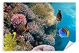 Postereck - Poster 0772 - Korallenriff, tauchen Fische Meer