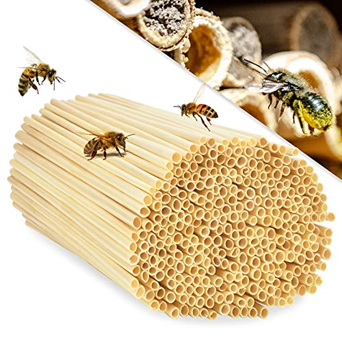 EKKONG 300 Tubi di Nidificazione con Diametro 3-5 mm per api Selvatiche, Cannucce 100% Natural per Hotel Insetto, Rifugi per Insetti, Casetta per Insetti, Hotel di Insetti Selvatici (14,5 cm)