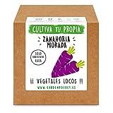 Garden Pocket - Kit Cultivo Zanahoria Morada