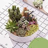 meixiang piante grasse fai-da-te, piante in vaso di cactus, purificano l'aria e piante verdi verde 3