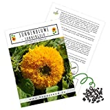 Farbenfrohe Sonnenb - www.mettenmors.de, Tipps für Gartenfreunde