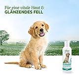 AniForte Aloe Vera Shampoo mild 400 ml Hundeshampoo parfümfrei- Naturprodukt für Welpen - 5