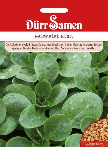 Dürr Samen 1500 Feldsalat Elan (Feldsalatsamen)