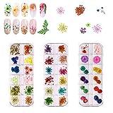 Arte de uñas flores secas 3 cajas 36 colores Flor Seca de Uñas 72 piezas...