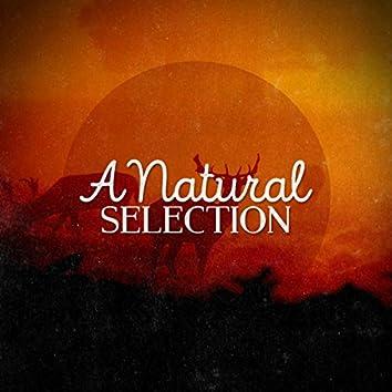 A Natural Selection