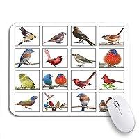 ROSECNY 可愛いマウスパッド 鳴き鳥のゴールドフィンチコラージュ鳥の裏庭鳥野鳥バードウォッチングノンスリップゴムバッキングノートパソコン用マウスパッドマウスマット