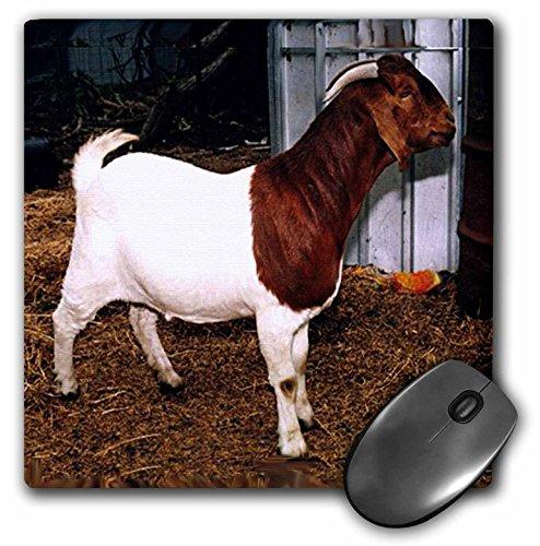 3dRose LLC 8 x 8 x 0.25 Inches Mouse Pad, Boer Doe Goat (mp_818_1)