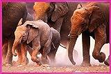 1art1 Elefantes Póster con Marco (Plástico) - Rebaño De Elefantes, Namibia (91 x 61cm)