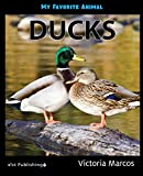 My Favorite Animal: Ducks (English Edition)