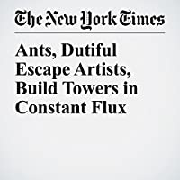 Ants, Dutiful Escape Artists, Build Towers in Constant Flux's image