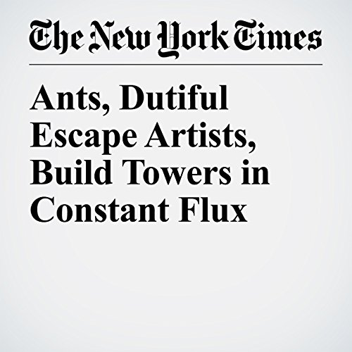 Ants, Dutiful Escape Artists, Build Towers in Constant Flux copertina
