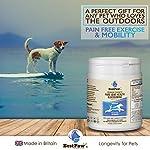 Best Paw Nutrition - Glucosamine pour Chiens et Chats - Soutien articulaire et complément Alimentaire pour Chiens et Chats - 300 Tablets #2