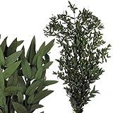 Verdissimo Eucalipto Parvafolia 160 Gramos Ramas para Arreglos, Verde