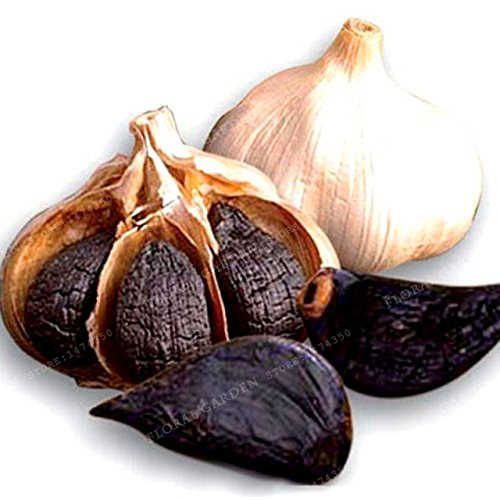 HOO PRODUCTS - 100pcs New Chili Black Garlic Seeds...