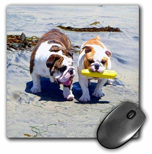 Top english bulldog mouse pad for 2021