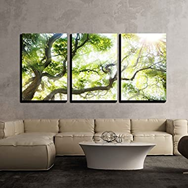 wall26 - 3 Piece Canvas Wall Art - Big Tree with Sun Light - Modern Home Decor Stretched and Framed Ready to Hang - 16 x24 x3 Panels