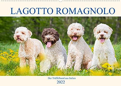 Lagotto Romagnolo - Der Trüffelhund aus Italien (Wandkalender 2022 DIN A2 quer): In 13 wunderschönen Fotos stellt die Tierfotografin Sigrid Starick ... Hunderasse vor. (Monatskalender, 14 Seiten )