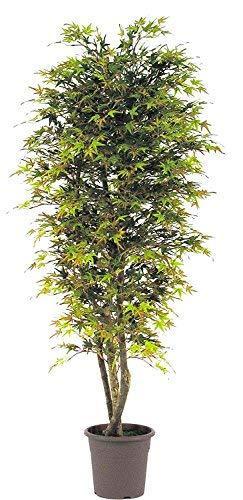 Arce Mini Otoño - Árbol artificial de decoración interior con troncos reales - Altura 175 cm